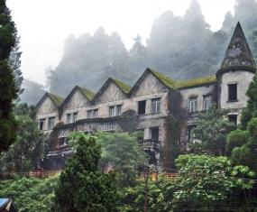 Mariegold, Darjeeling